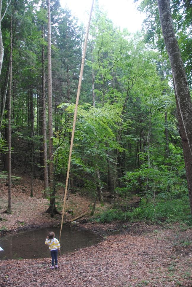 LO STILO di G. Gazzola: uno stilo lungo quasi 20 metri sospeso tra i tronchi che cercano il cielo e che, ad ogni soffio di vento, scrive sull'acqua silenziosamente. Che meraviglia!