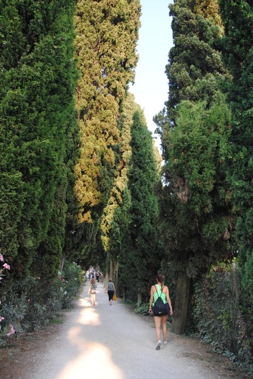 il viale alberato che porta al Parco