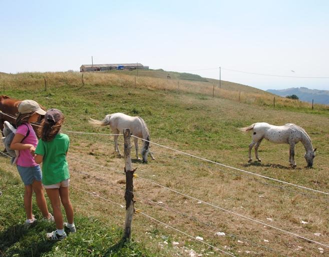 pascoli di cavalli nei pressi di malga Gambon