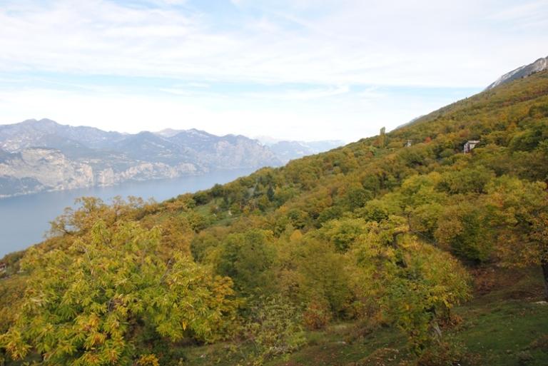 i boschi che salgono verso Prada Alta e l'alto lago