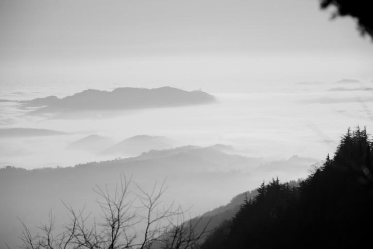 Moscal con nebbia